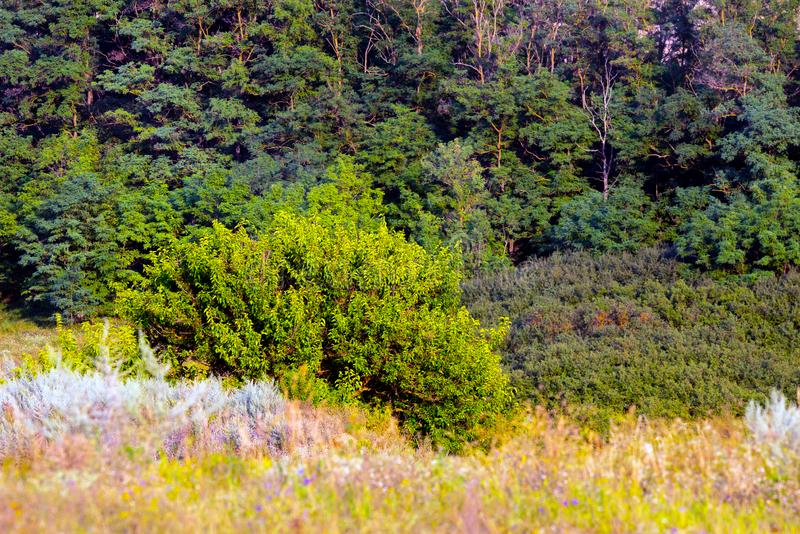 Forest trees. nature green wood sunlight backgrounds. Landscape, environment, foliage, park, season, summer, beauty, daylight, outdoor, sunny, wild, beautiful stock image