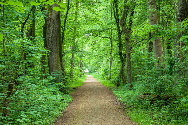 Forest Trees Park Footpath Springtime stock fotografie