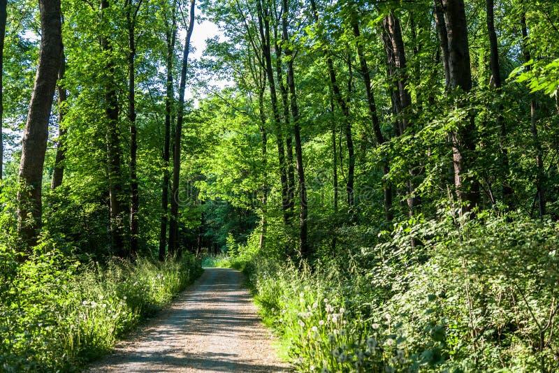 Forest Trees Park Footpath Springtime fotografia stock libera da diritti