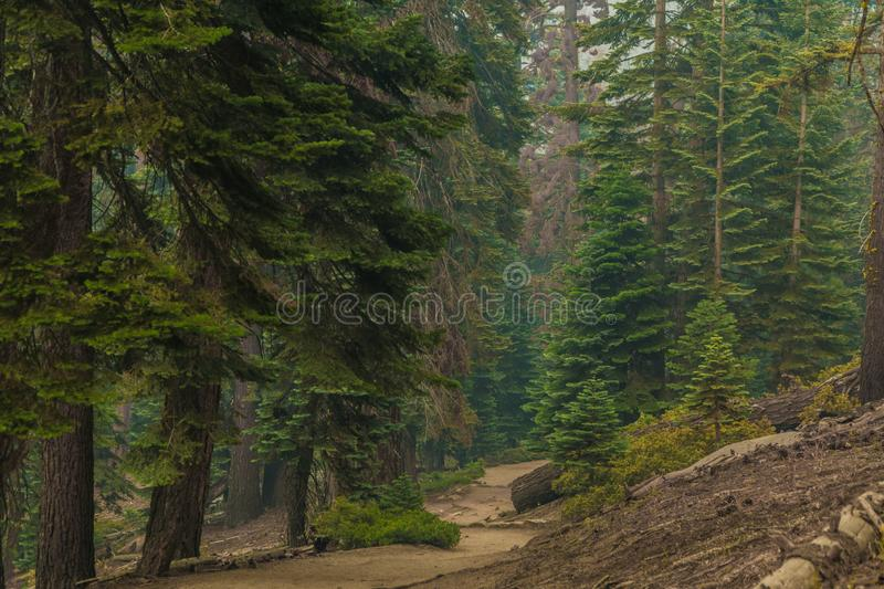 Yosemite Forest trail royalty free stock photography