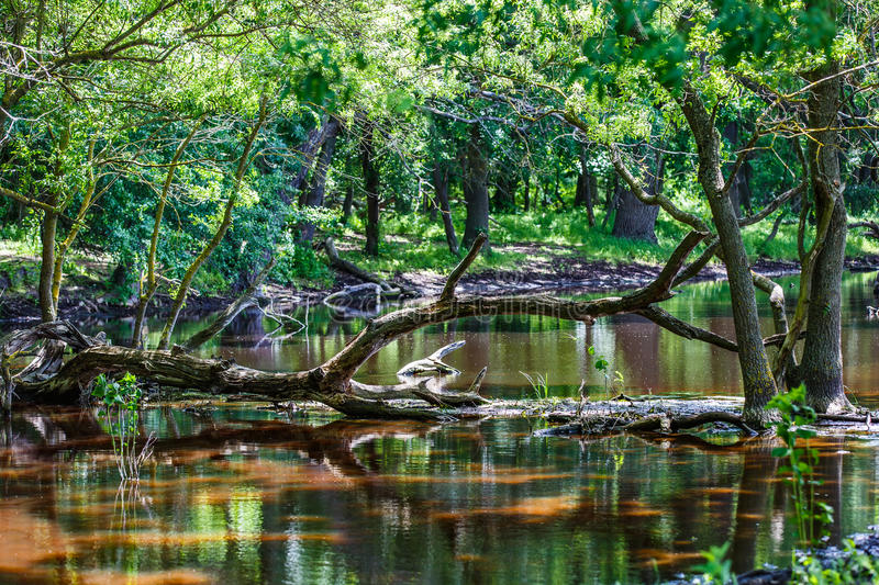 Forest trees reflection in water. Photo of forest trees reflection in water royalty free stock photography