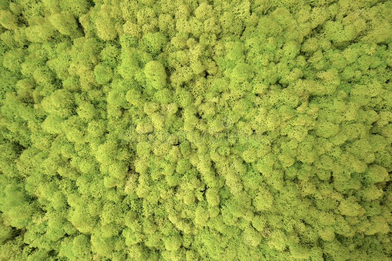 Forest Trees Seen From Above textur fotografering för bildbyråer