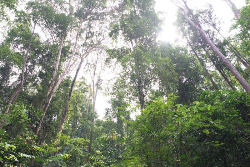 Forest Trees tropical fotografia de stock royalty free