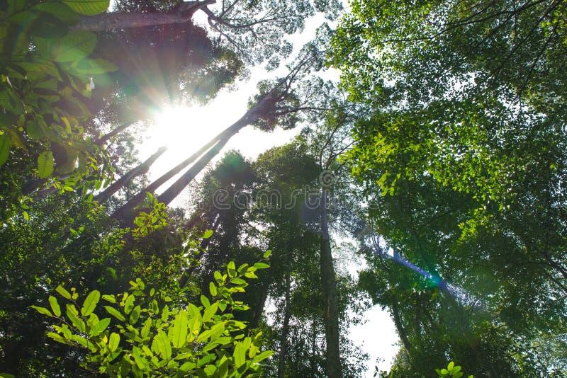 Forest Trees tropical imagem de stock