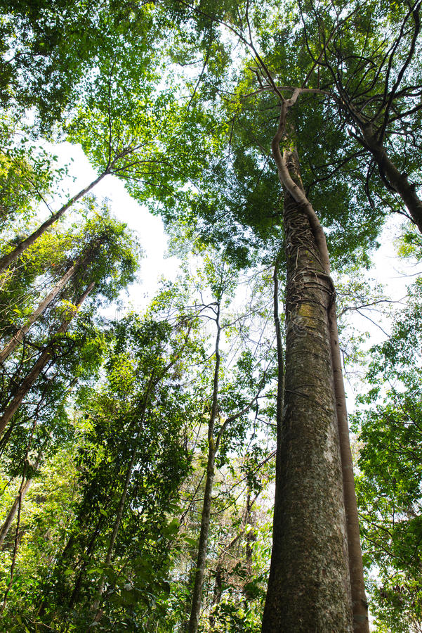 Forest Trees tropical imagens de stock royalty free