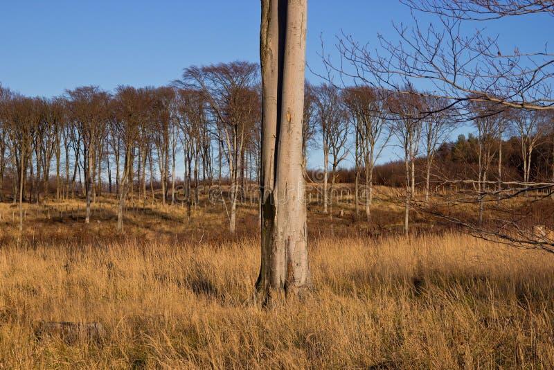 Forest Trees und hohes Gras lizenzfreie stockfotos