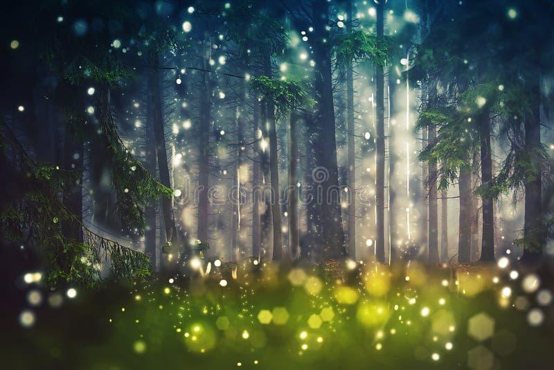 Forest Trees Wood glänta - mystiker, Bokeh, Lens signalljus, kamerasuddighet - solljus arkivbilder