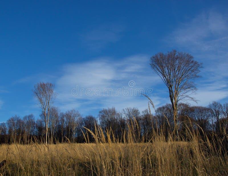 Forest Trees y alta hierba imagen de archivo