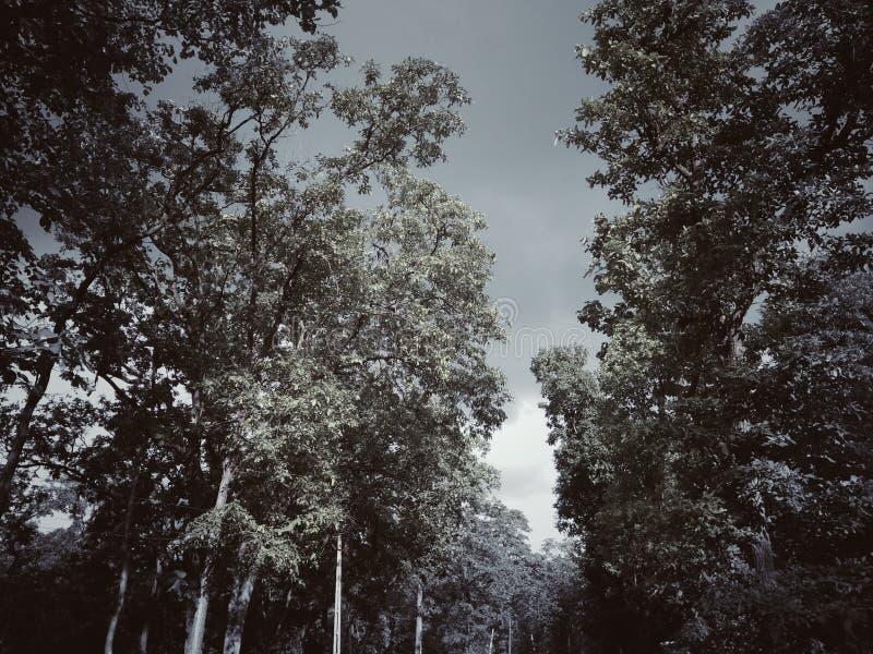 Forest Trip arkivfoto