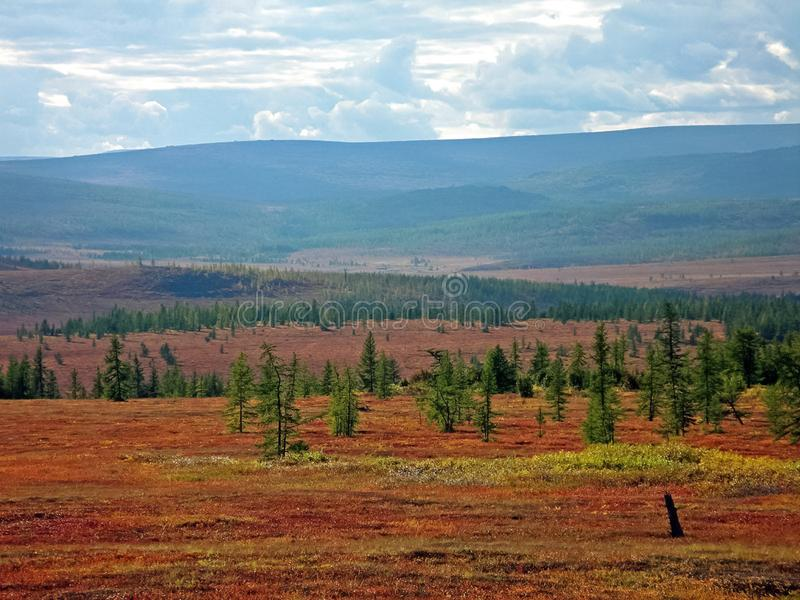 Forest tundra  in the summer. Taiga of Siberia. Yamal. Forest tundra landscape in the summer. Taiga of Siberia. Yamal royalty free stock images