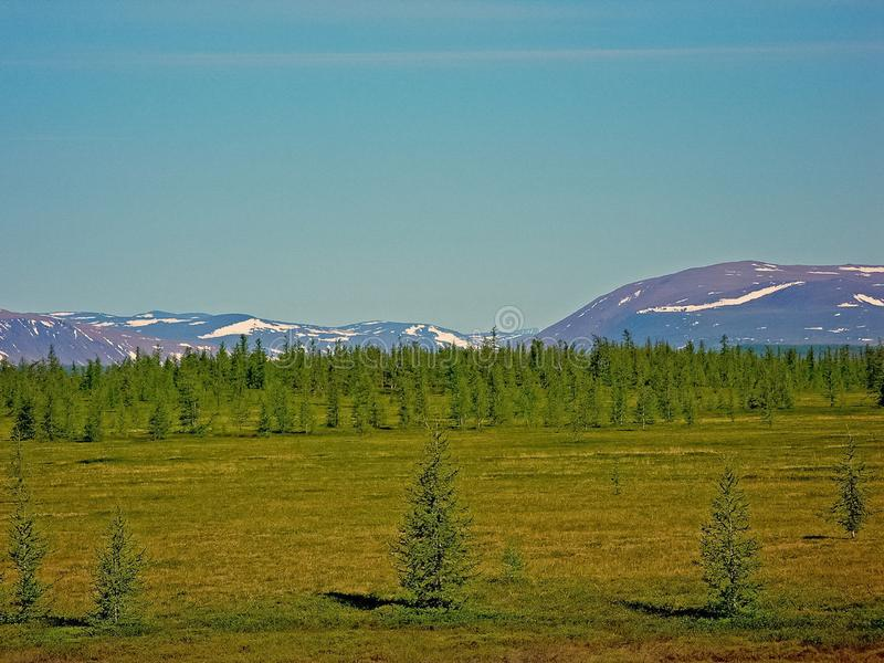 Forest  in the summer. Taiga of Siberia. Yamal. Forest tundra landscape in the summer. Taiga of Siberia. Yamal stock photos