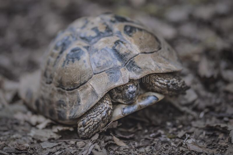 Forest turtle in a natural environment.  stock images