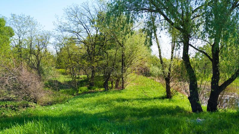 Forest in Ukraine, spring. Green and Blue colors. royalty free stock photos