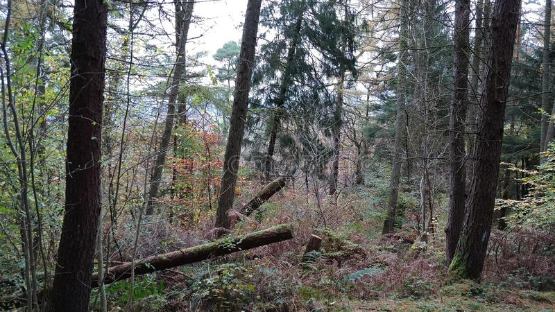 Forest vegetation royalty free stock photography