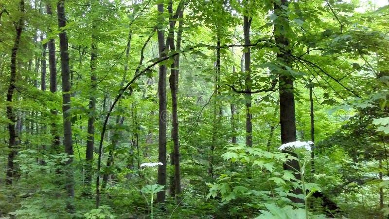 Forest View imagens de stock