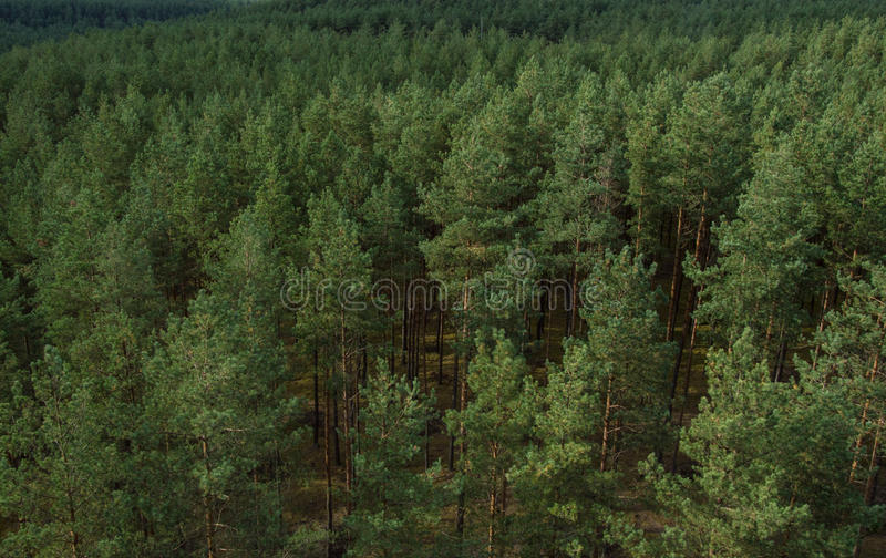Forest view stock photos