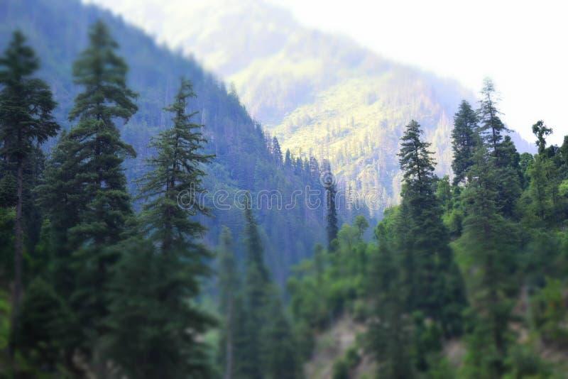 Forest View Mountains fotografia de stock royalty free