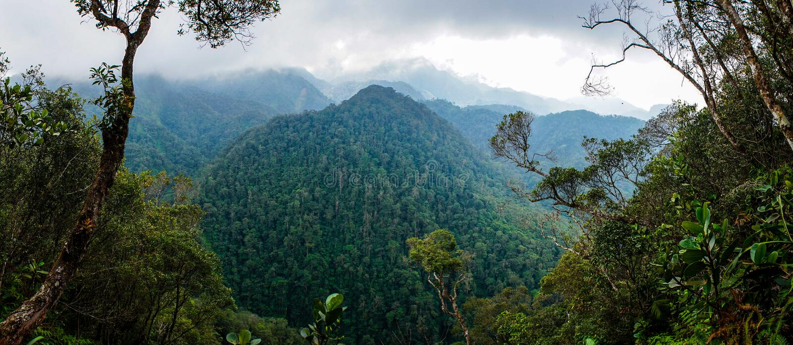 Forest view in PANACAM National Park in Honduras.  royalty free stock photos