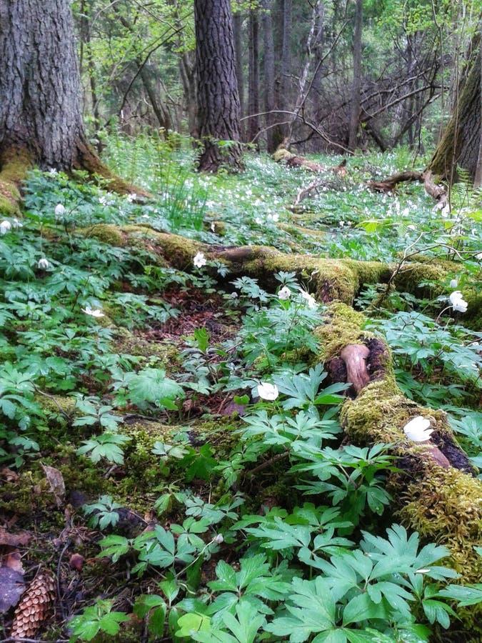 Forest Walk fotos de archivo