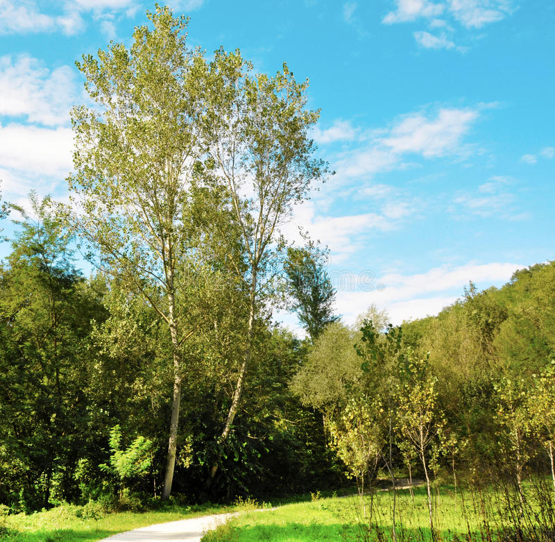 Download Forest walk stock image. Image of outdoors, path, sunlight - 13409693