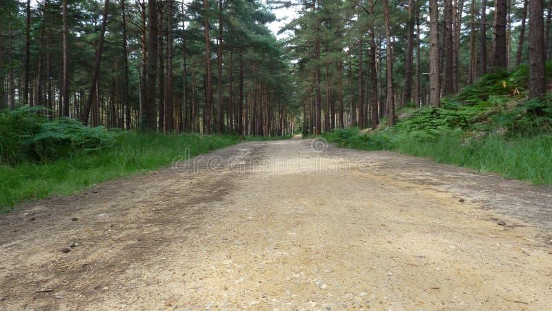 Forest Walk image libre de droits