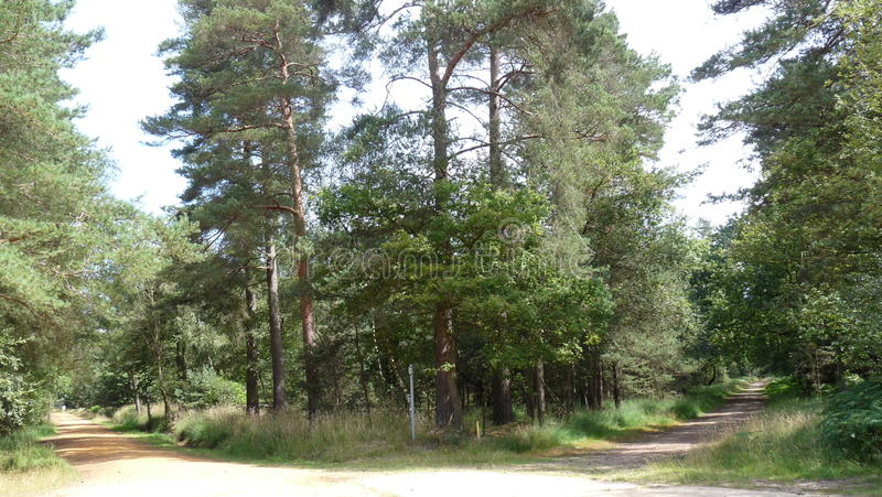 Forest Walk fotografia stock libera da diritti