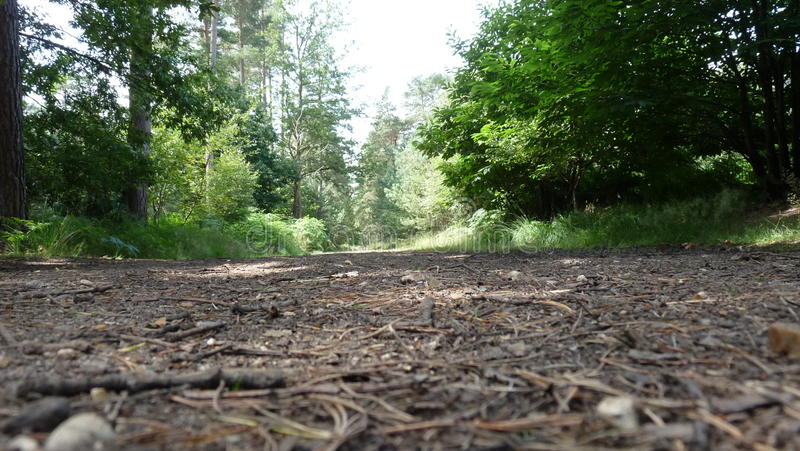 Forest Walk stock foto's
