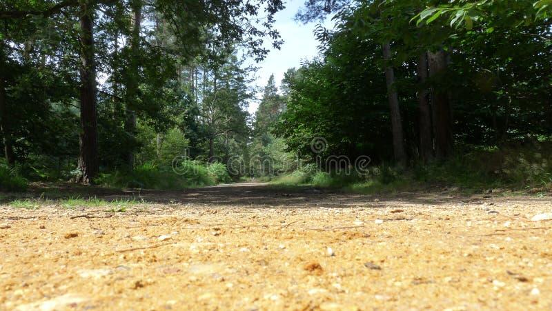 Forest Walk stockbilder