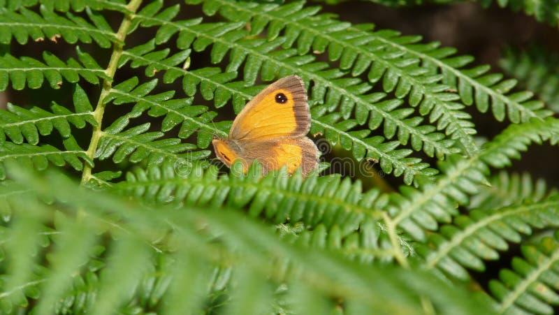 Forest Walk stockbild