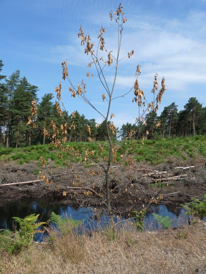 Forest Walk royalty-vrije stock afbeeldingen