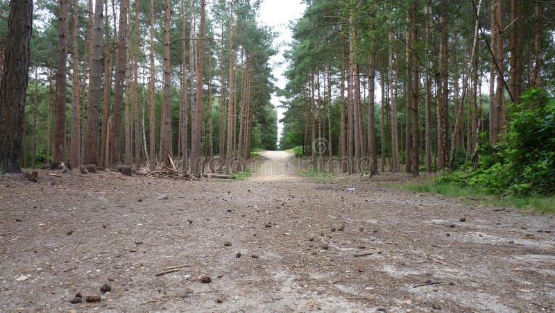 Forest Walk royalty-vrije stock afbeelding