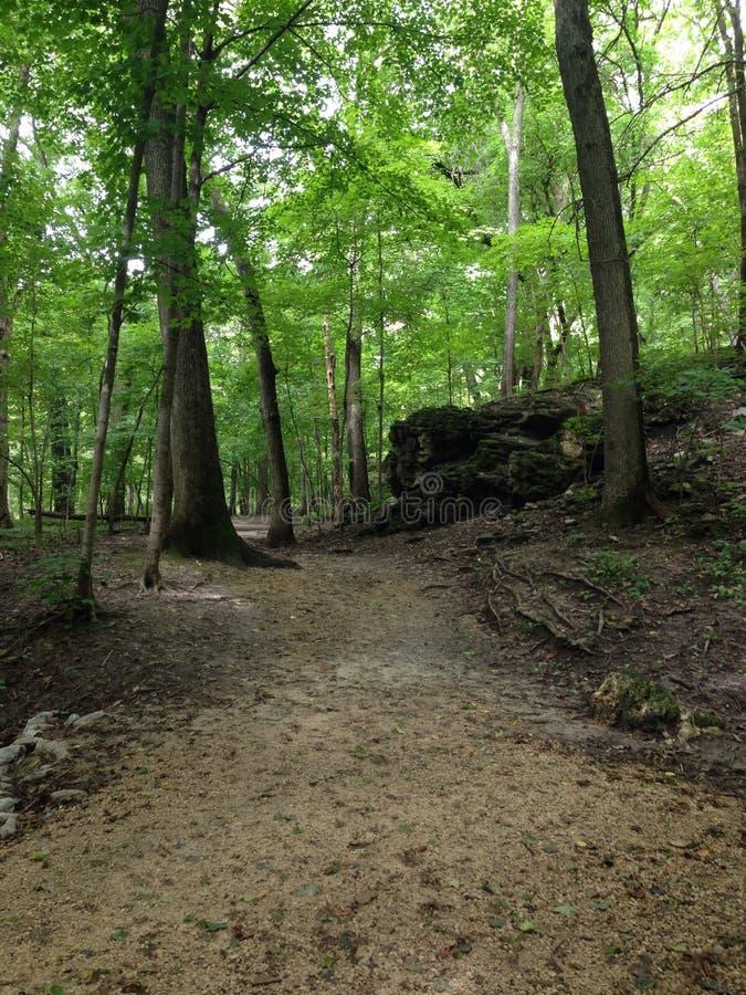 Forest Walk images libres de droits