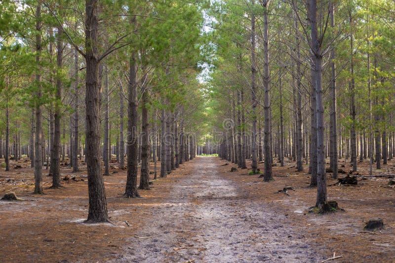 Forest Walkway Path fotografering för bildbyråer