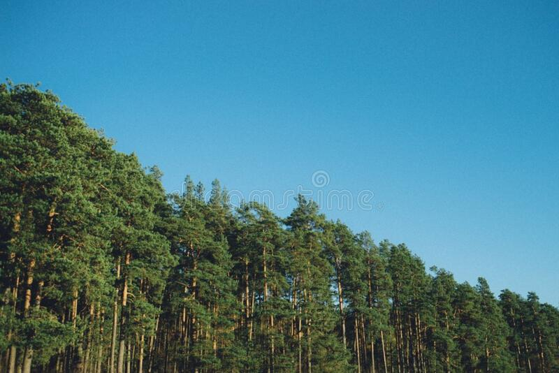 In the forest royalty free stock photography