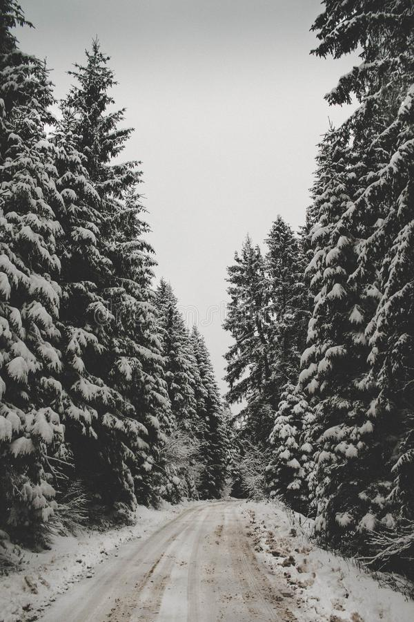 The forest that was once so alive now chills me. stock image