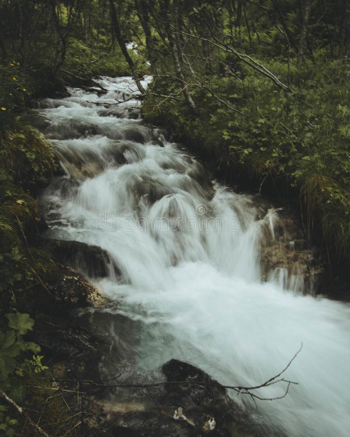 Forest Water Falls stock images