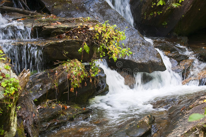 Download Forest waterfall stock photo. Image of foliage, green - 11976368
