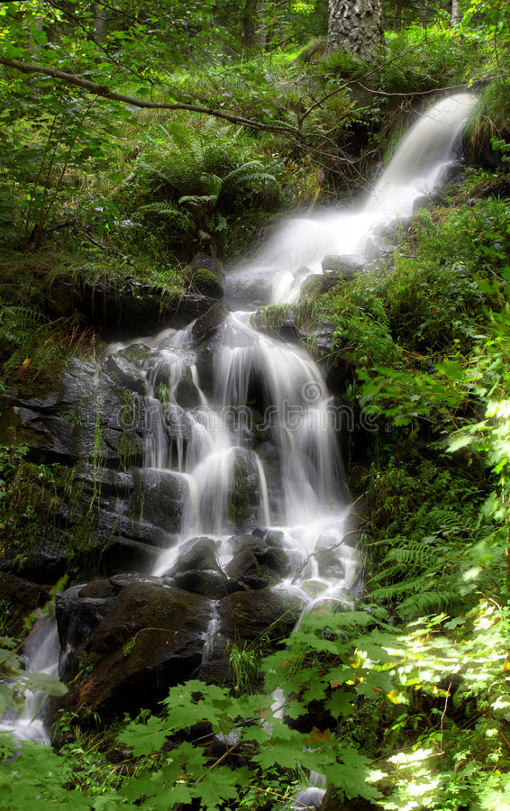 Forest Waterfall. 15 MegaPixels royalty free stock photography