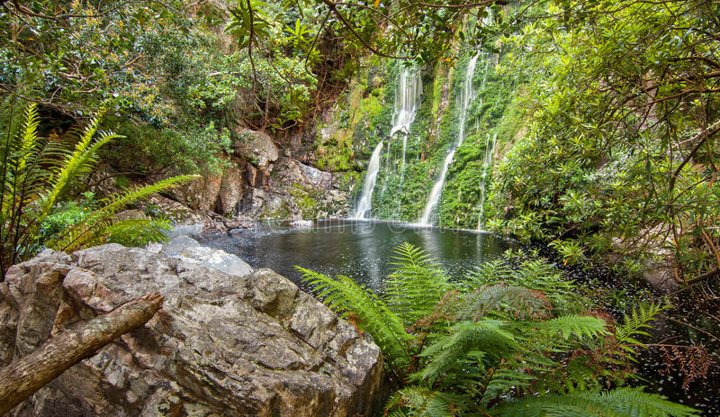 Download Forest waterfall stock image. Image of forest, stone - 27946881