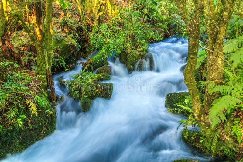 Forest waterfall cascading between mossy rocks royalty free stock photo