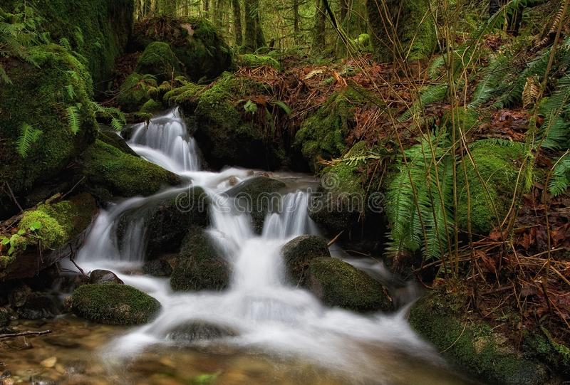 Forest Waterfall, Washington State photographie stock libre de droits
