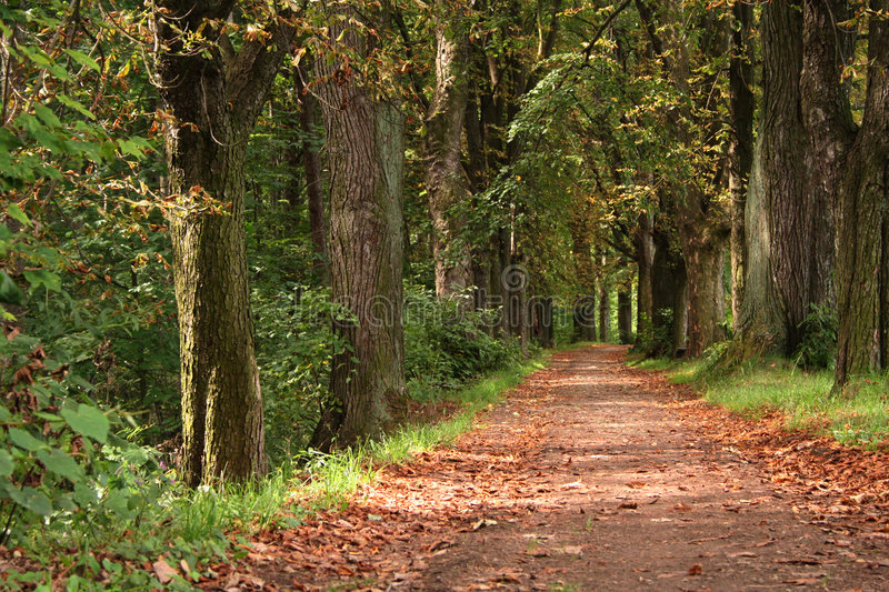 Forest way. In the autumn royalty free stock photo