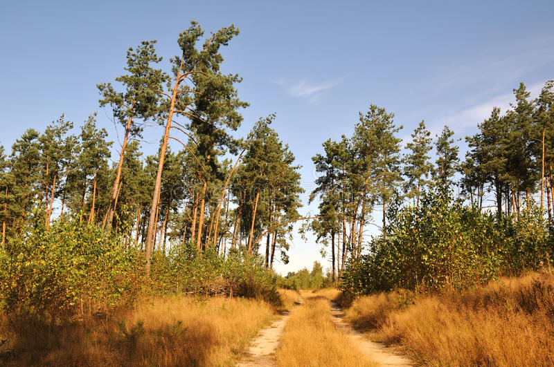 Download Forest way stock image. Image of straight, sand, landscape - 14850571