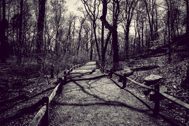 Forest Way fotografia stock libera da diritti