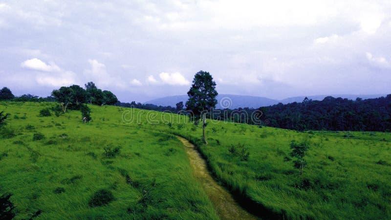 Forest Way royalty-vrije stock afbeeldingen