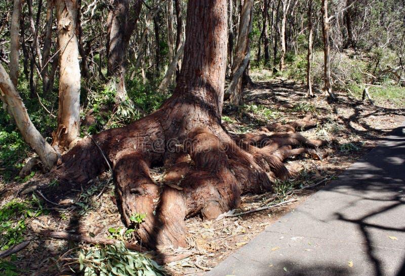 Forest Way en Noosa dirige el parque nacional imágenes de archivo libres de regalías