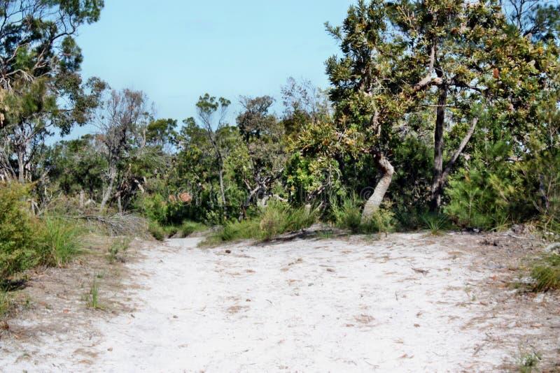 Forest Way en Noosa dirige el parque nacional fotografía de archivo libre de regalías