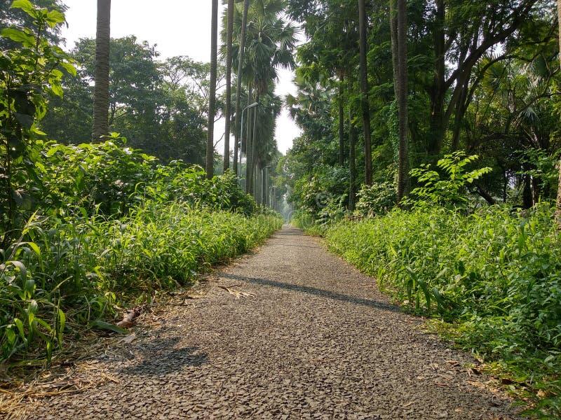 Forest Way immagine stock libera da diritti