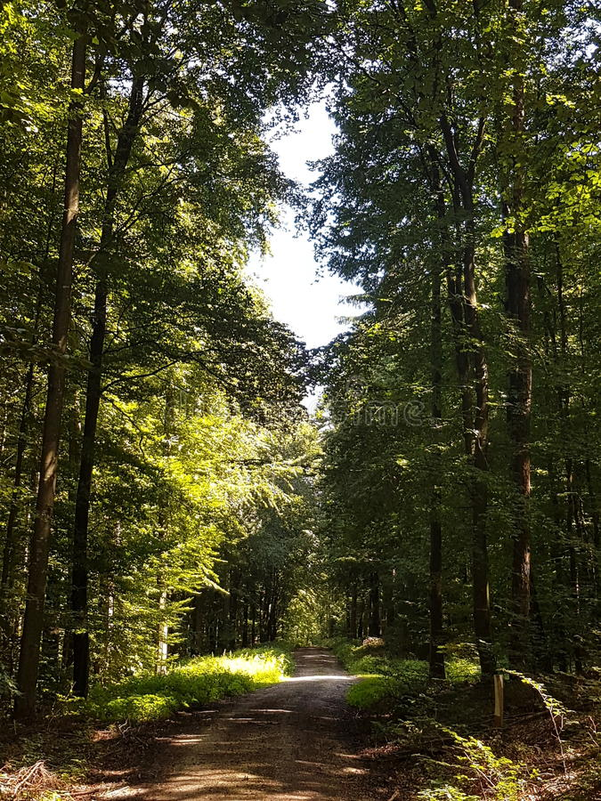 Into a forest stock photography