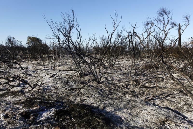 Forest Wild après le feu photographie stock libre de droits